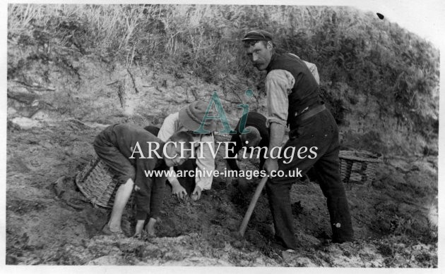 Scilly Isles N Clarke, Guy, Algy and Clem digging potatoes St Martins CMc