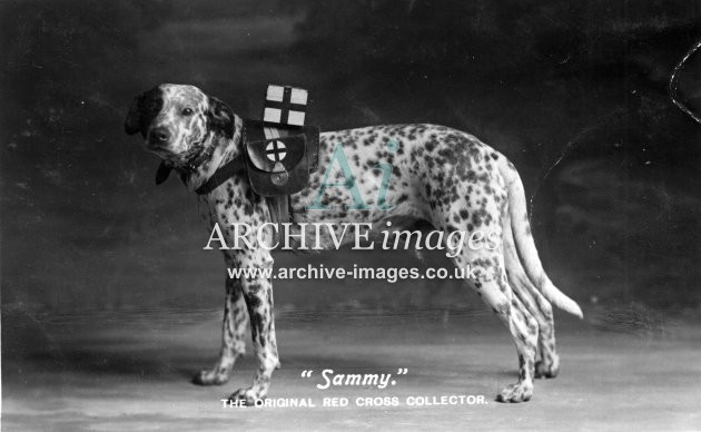 Aberdeen city Sammy Red Cross collecting dog c1915 adelphi series CMc