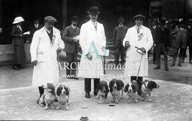 Dogs Prize winning Beagles in dog show c1910 CMc