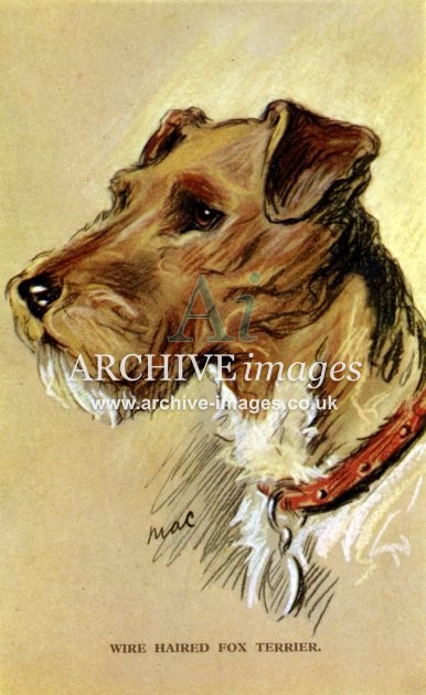 Dogs by Mac Wire Haired Fox Terrier c1930 CMc
