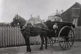 Edwardian Horse & Trap MD