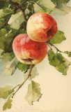 Christina Klein, Fruit, Apples MD