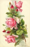 Christina Klein, Flowers, Pink Roses MD