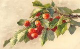 Christina Klein, Fruit, Red Cherries MD