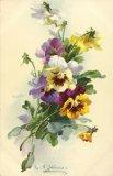 Christina Klein, Flowers, Pansies MD