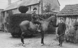 Rural Horsemen MD