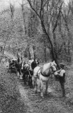 Edwardian Rural, Horses Hauling Timber MD