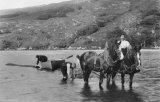 Rura Fishing With Horses In Loch MD