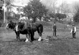 Ploughing With Horses nr Weston Super Mare c1910