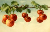 Christina Klein, Fruit, Red Cherries
