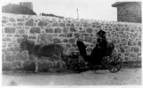 Scilly isles St martins donkey cart N and Mr Chick 1912 CMc.jpg