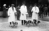 Dogs Prize winning Beagles in dog show c1910 CMc.jpg