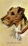 Dogs by Mac Wire Haired Fox Terrier c1930 CMc.jpg